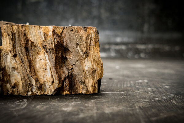 Petrified wood candle holder