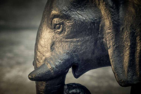 boy on elephant details elephant side